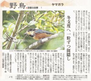野鳥~京都の四季~